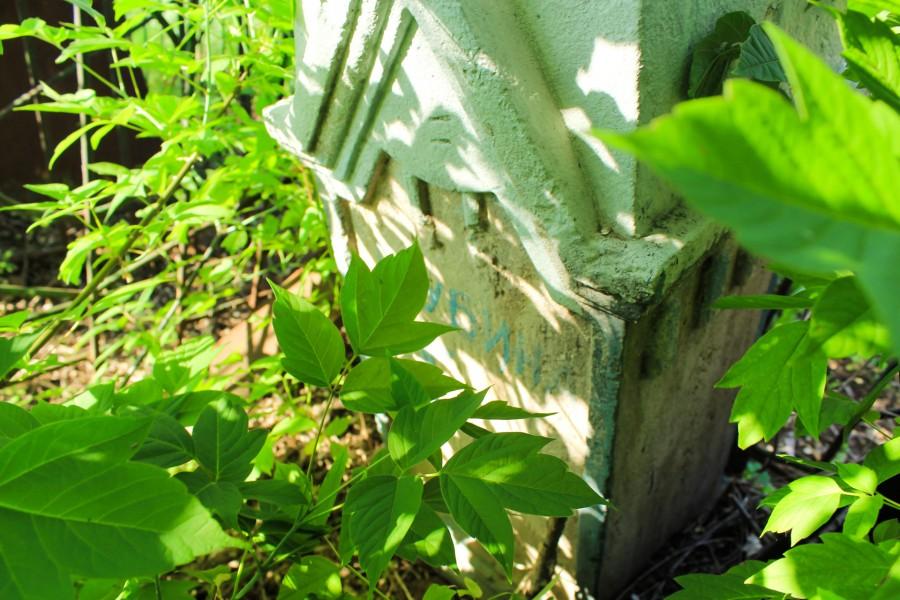 Старое кладбище Берд