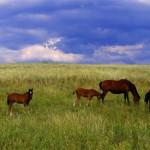Подворье казака: Скотный двор
