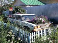 Цветущий автомобиль на Бердах