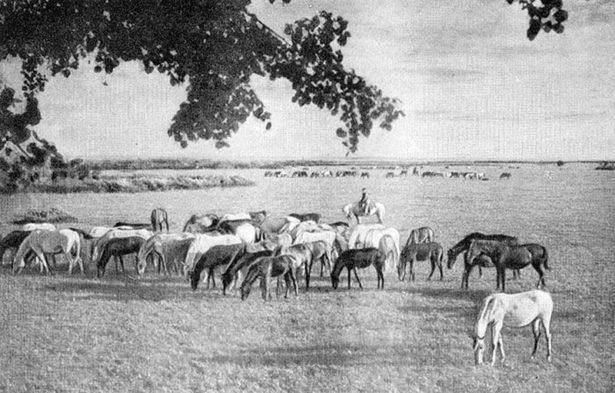 Страницы истории коневодства Оренбургского края XIX — начала XX в.