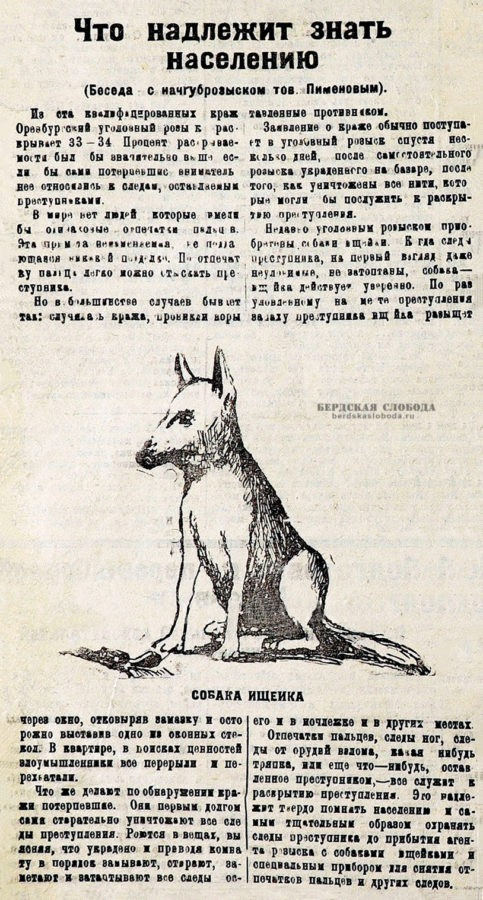 В результате, уже к концу 20-х годов прошлого столетия в Оренбуржье появились первые собаки - ищейки.