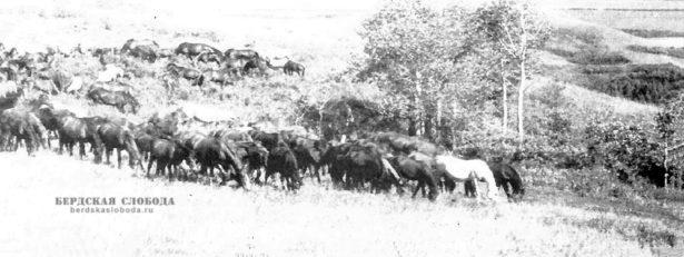 Исследование Оренбургского края началось в первой половине XVIII века. Он представлял собой огромную неизученную территорию, включающую в себя Заволжье, Южный Урал, Приуралье и Казахские степи.